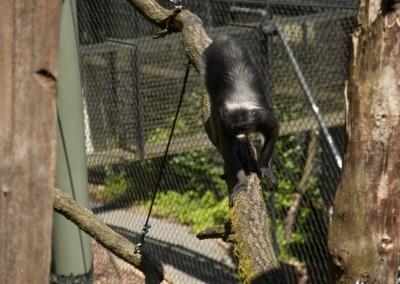 Burgers Zoo 2012-13