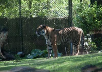Burgers Zoo 2012-15