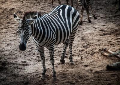 Burgers Zoo 2013-10